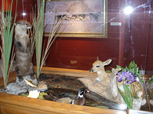 Otter, fawn and wood duck